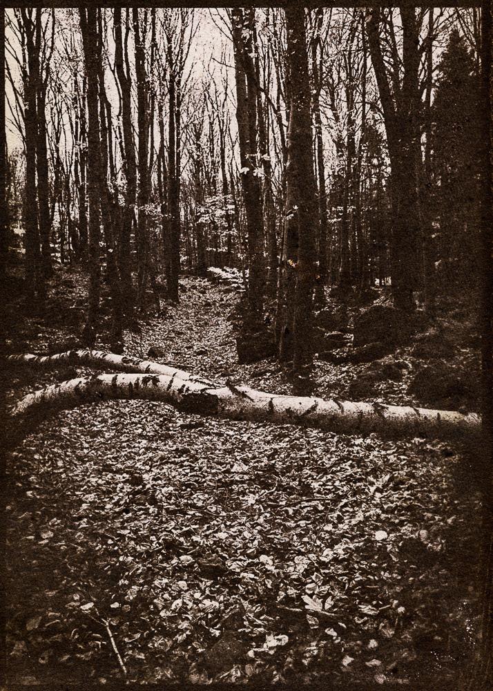 """Wojciche Sternak, Foto aus dem Zyklus """"Monte Silentii"""", Albumen print, 5x7 inch format, © Wojciech Sternak"""