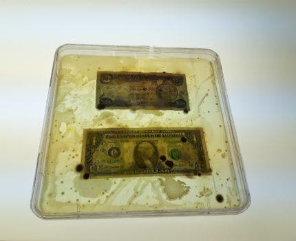 Finis Pecunia! Viva Mycelia! – »Borderless Bacteria / Colonialist Cash« von Ken Rinaldo im Art Laboratory Berlin