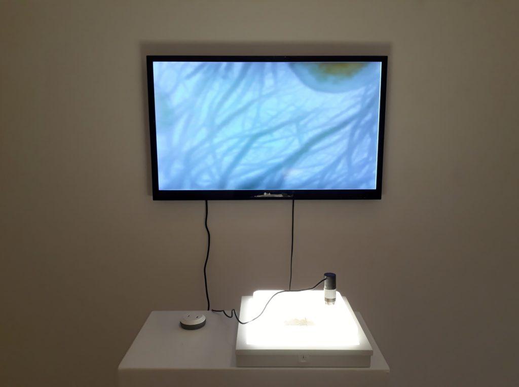 Ken Rinaldo, Borderless Bacteria / Colonialist Cash, Ausstellungsansicht, Art Laboratory Berlin, 2020. Foto © Urszula Usakowska-Wolff